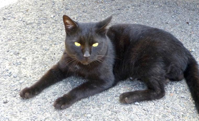 『駐輪場の猫』