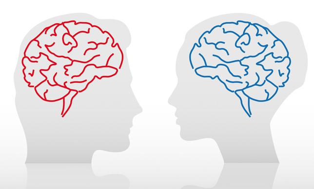女脳と男脳