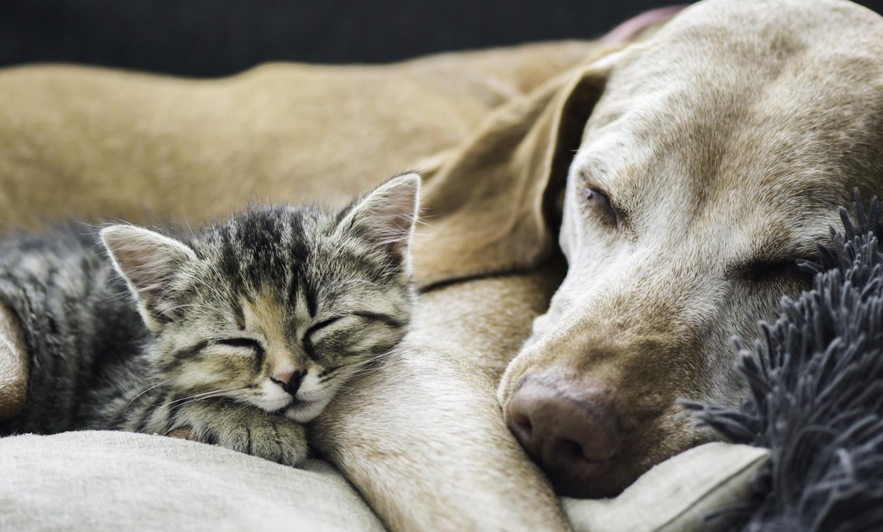 戌年の終わりに思う「コミュ力は犬猫に学べ」