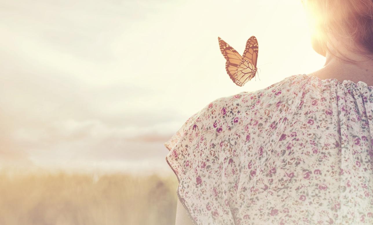 蝶になったハルモニと、ハルモニがまいた種