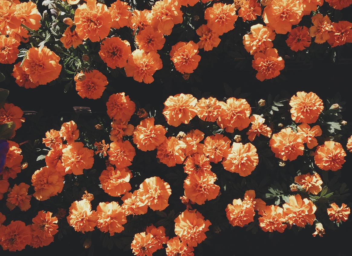 彼女たちのために花束を