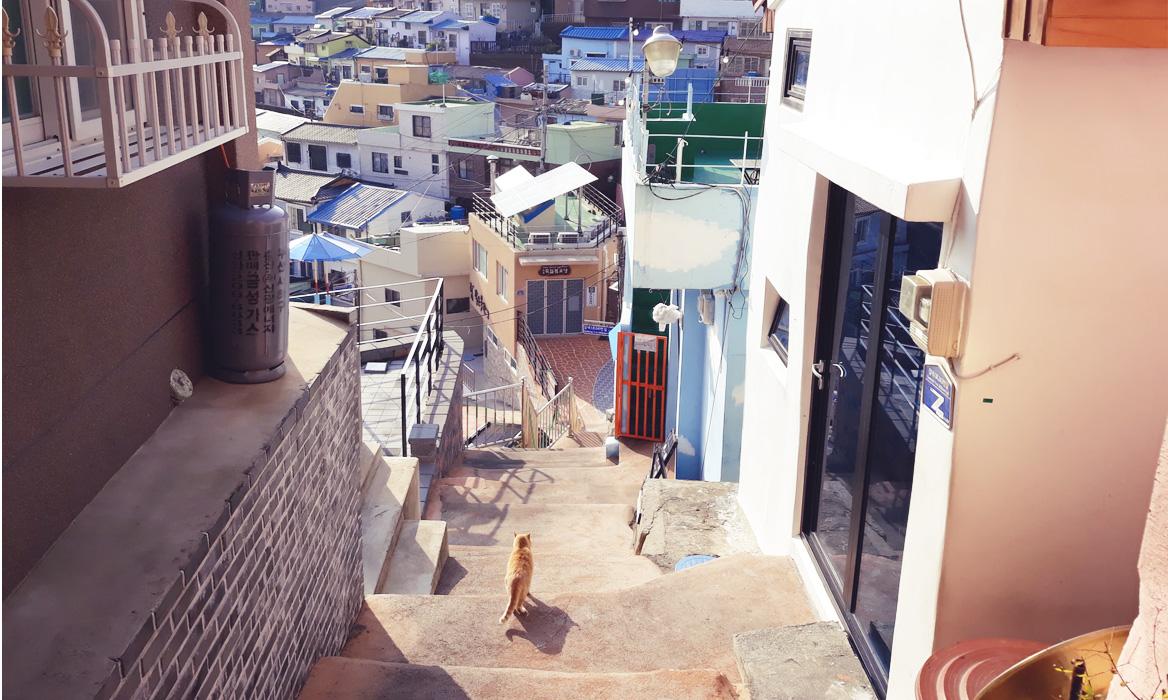 YURIさんのフェミカンルーム65 「行動にも感情にも意味があると気づいた韓国旅行」